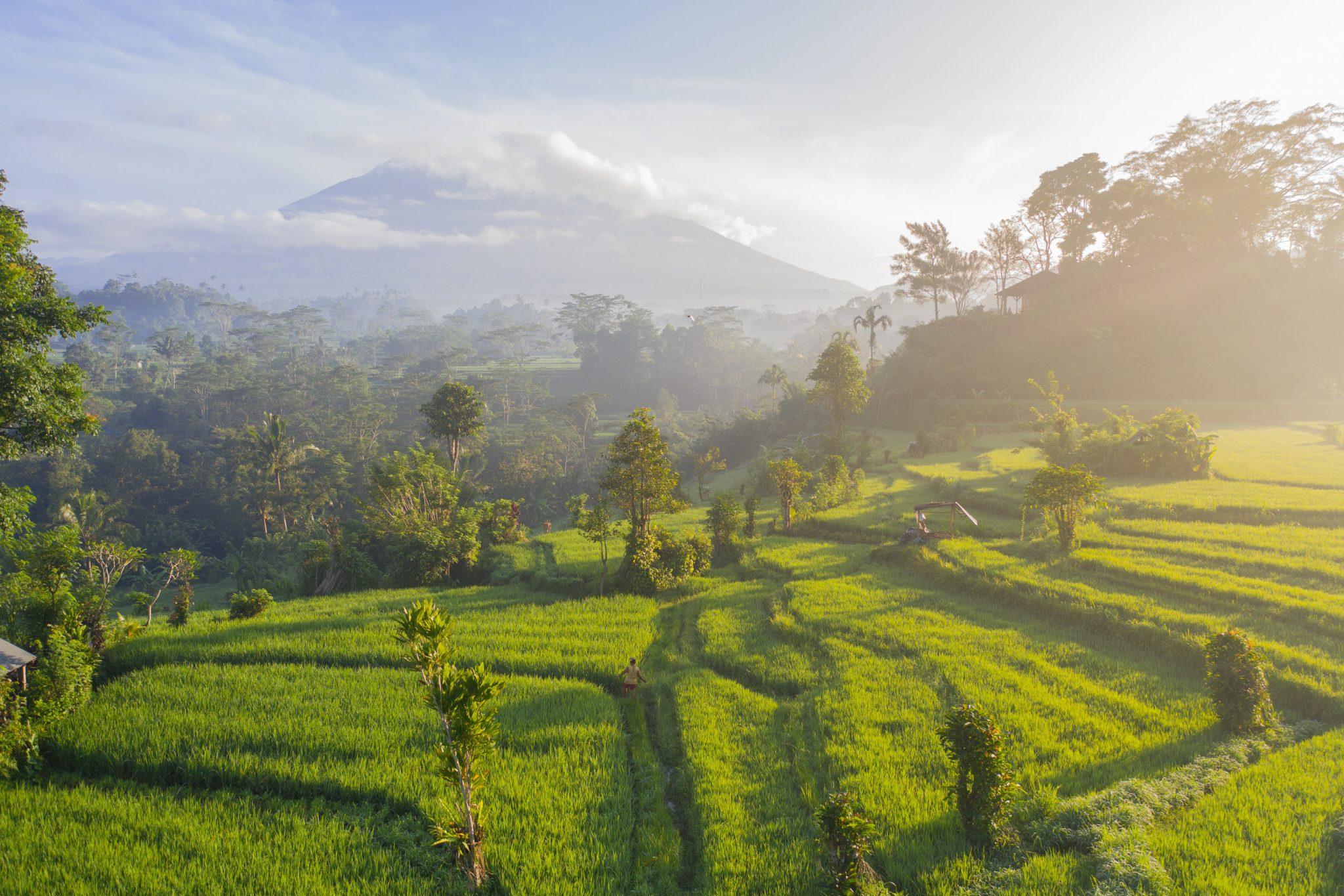 Bali – wyspa wIndonezji – warta odwiedzenia?